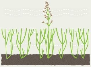 grass08