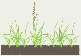grass09