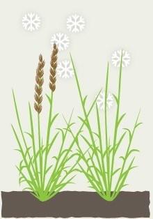 grass10