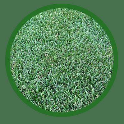 bellabluegrass circle
